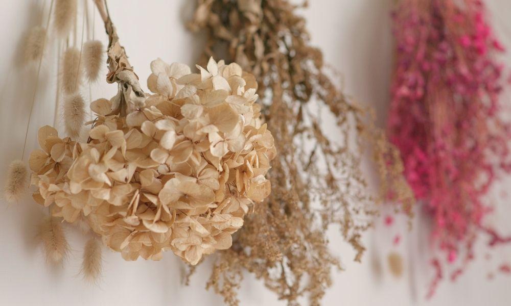 嗡嗡樹-乾花