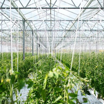 horticulture-greenhouse-video-thumbnail.jpg